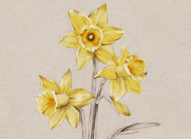 Daffodil NZ Home and Garden Magazine Spring