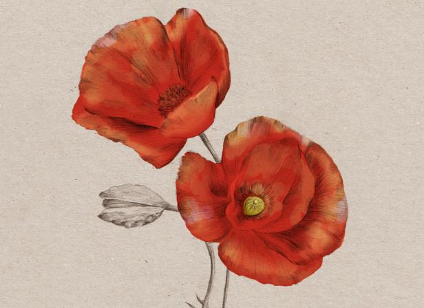 Poppy NZ Home and Garden Magazine