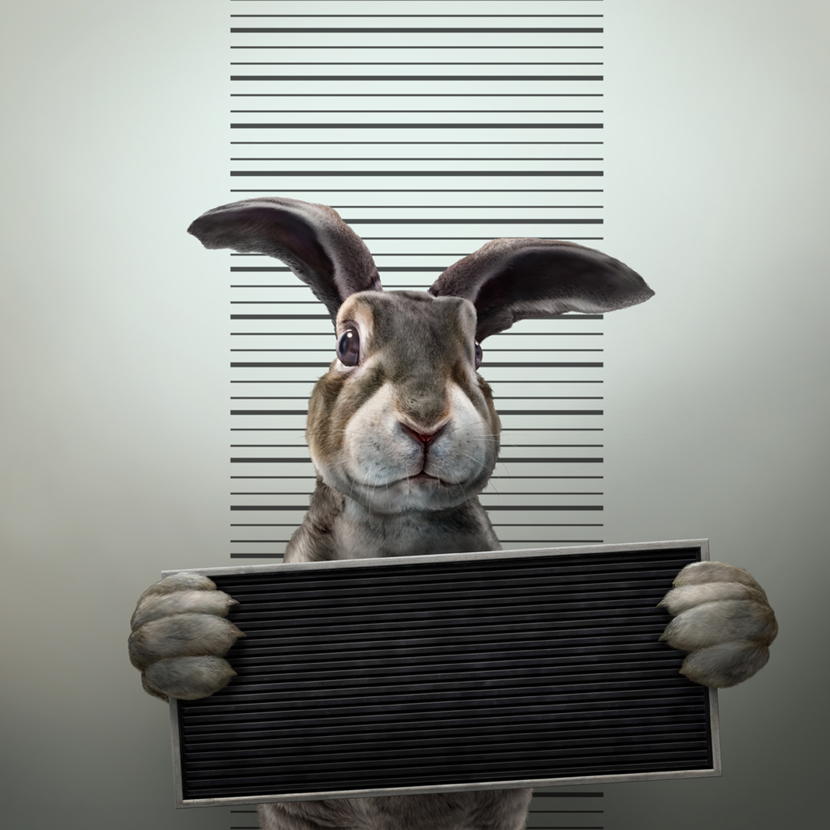 Rabbit Arrest