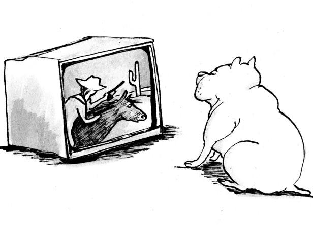 Cats Dogs TV Play It Again Sam Transworld
