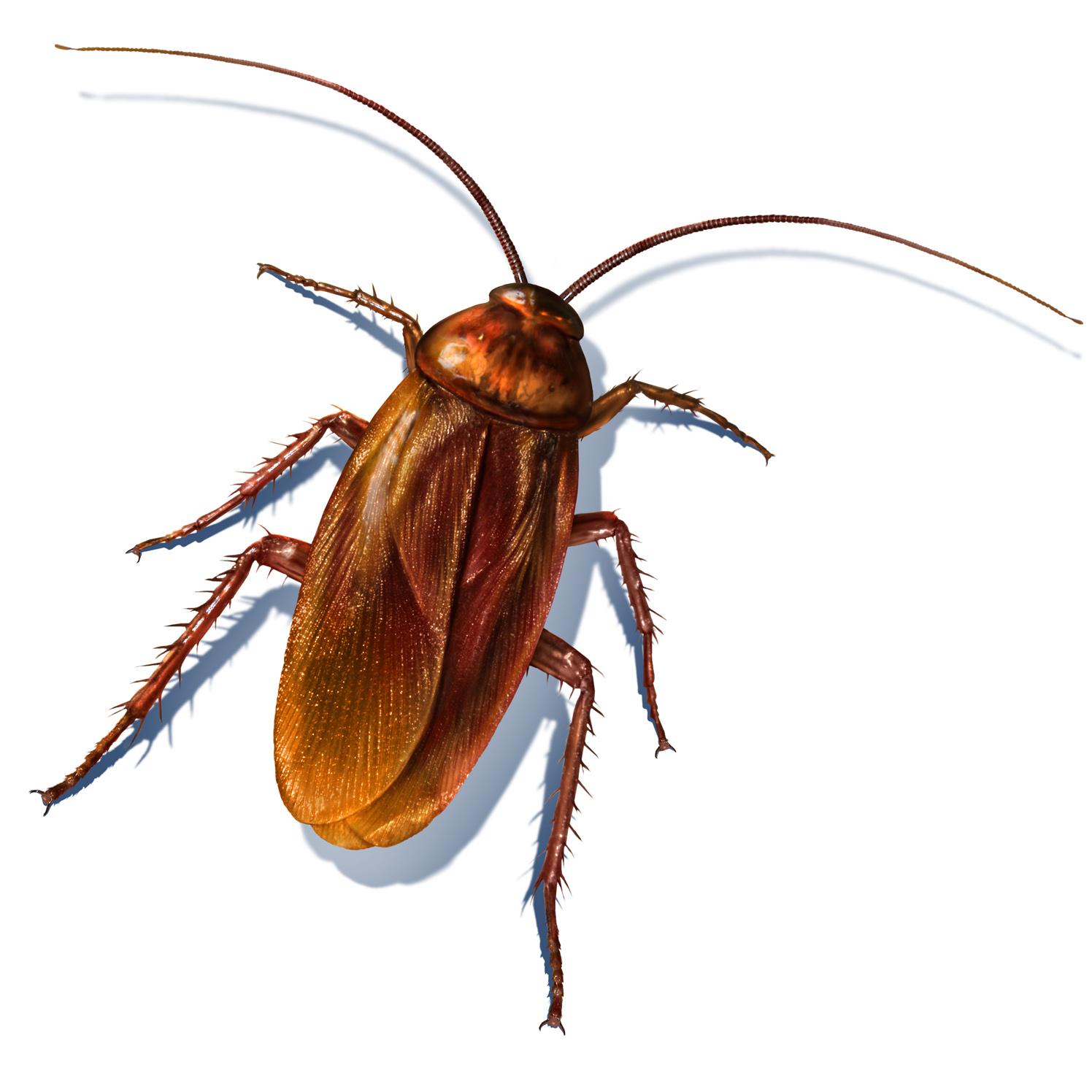Jeff's Cockroach