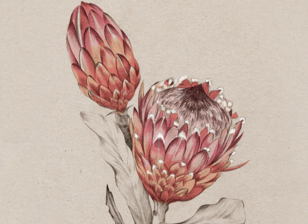 Protea NZ Home and Garden Magazine