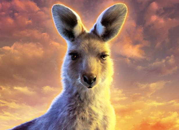 Kangaroo DownUnder