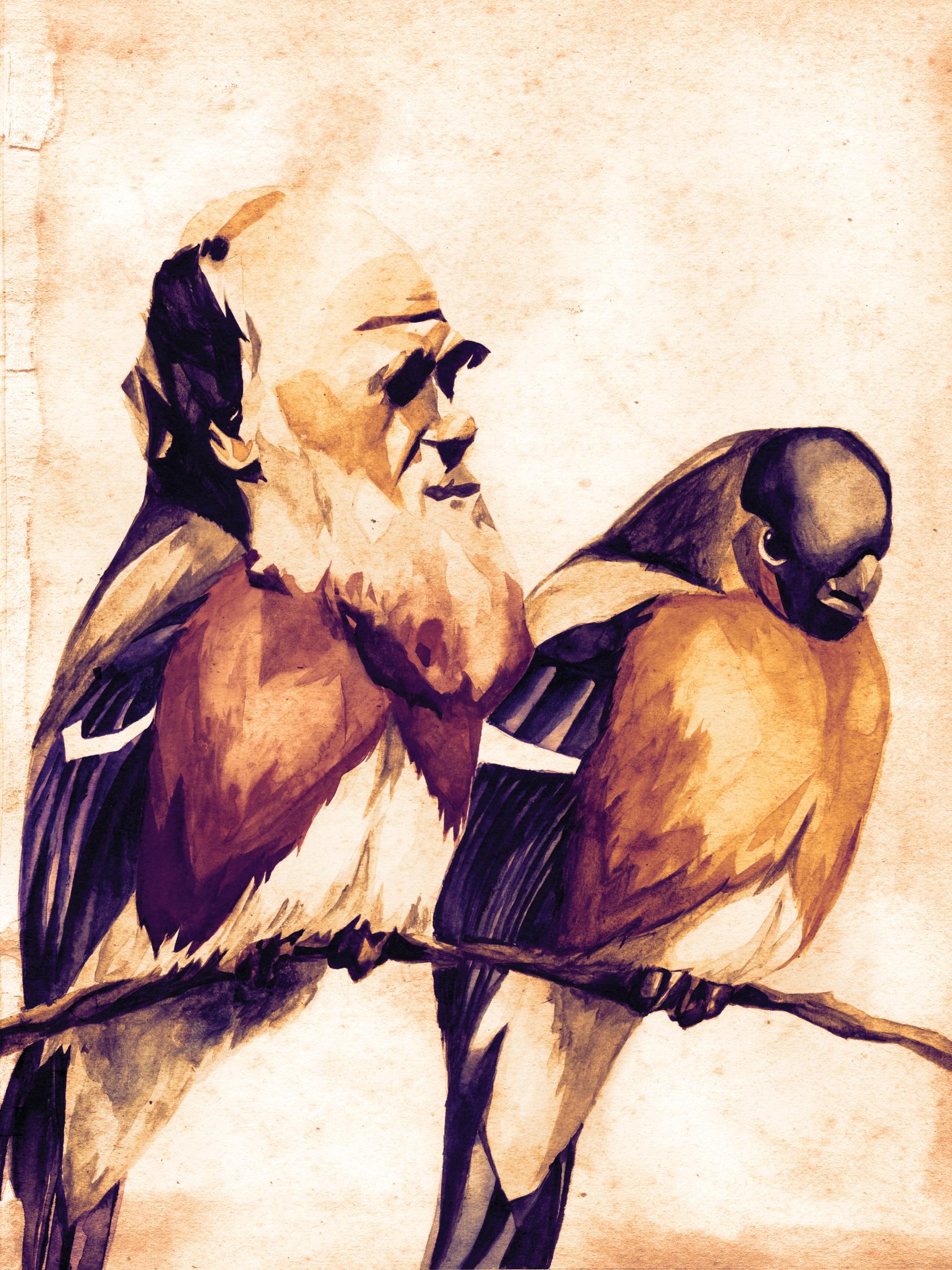 56_darwinsfinches.jpg