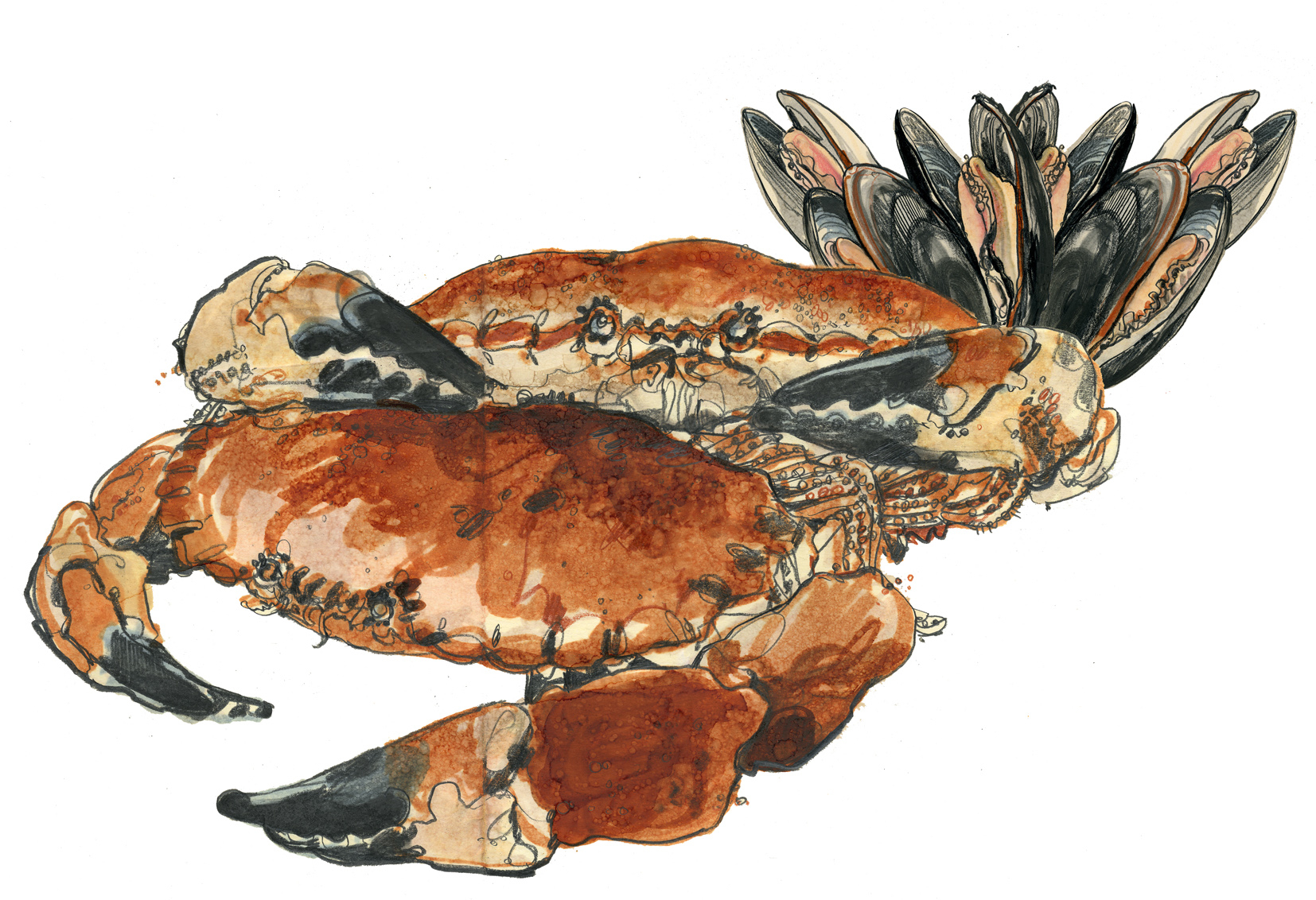 Cromer Crabs Waitrose Food Illustrated