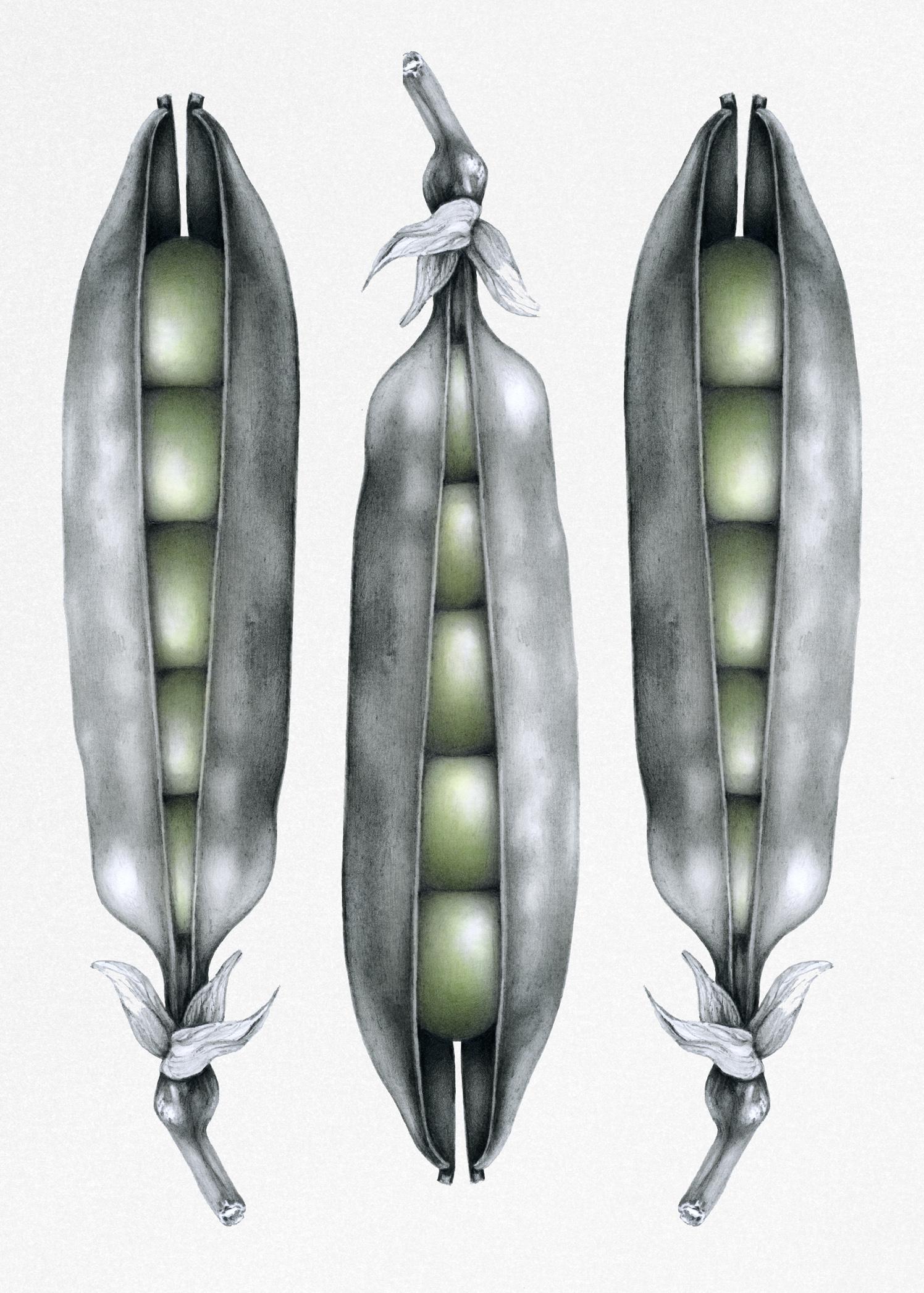 Three Peas In A Pod Green