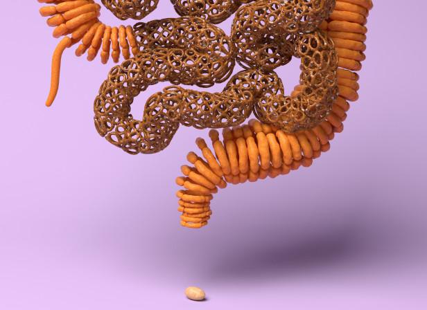 salintestines.jpg