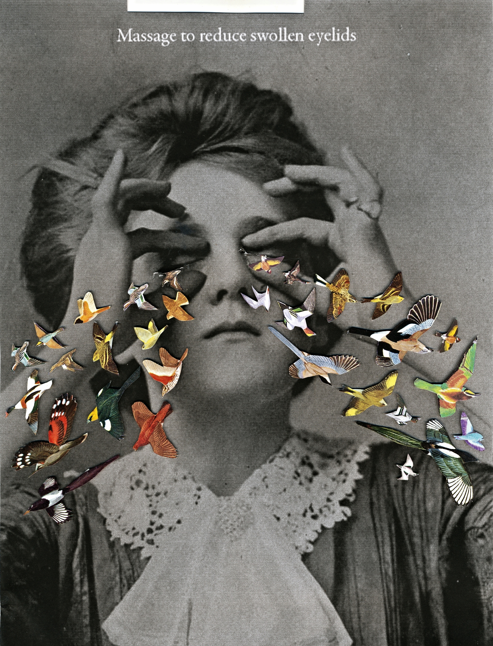 Bird Eyes, 2016.jpg