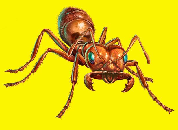 Ortho Ant