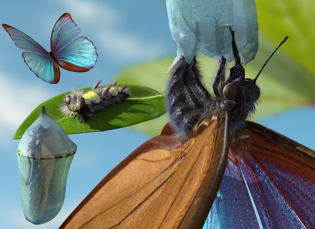 Butterfly Life Cycle Double Spread Book