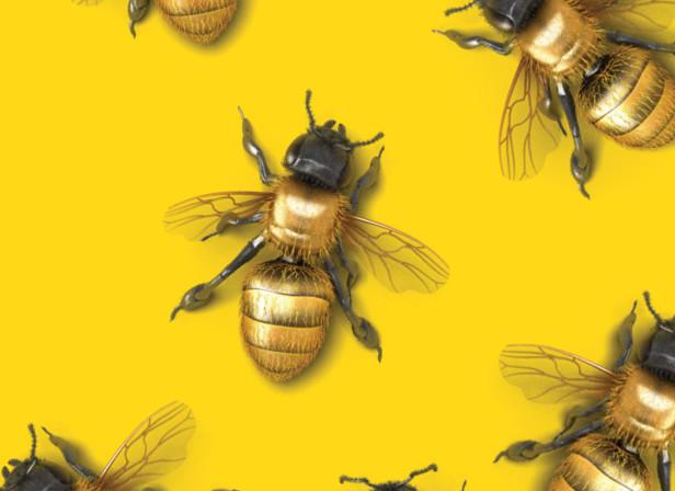 Digit Bees