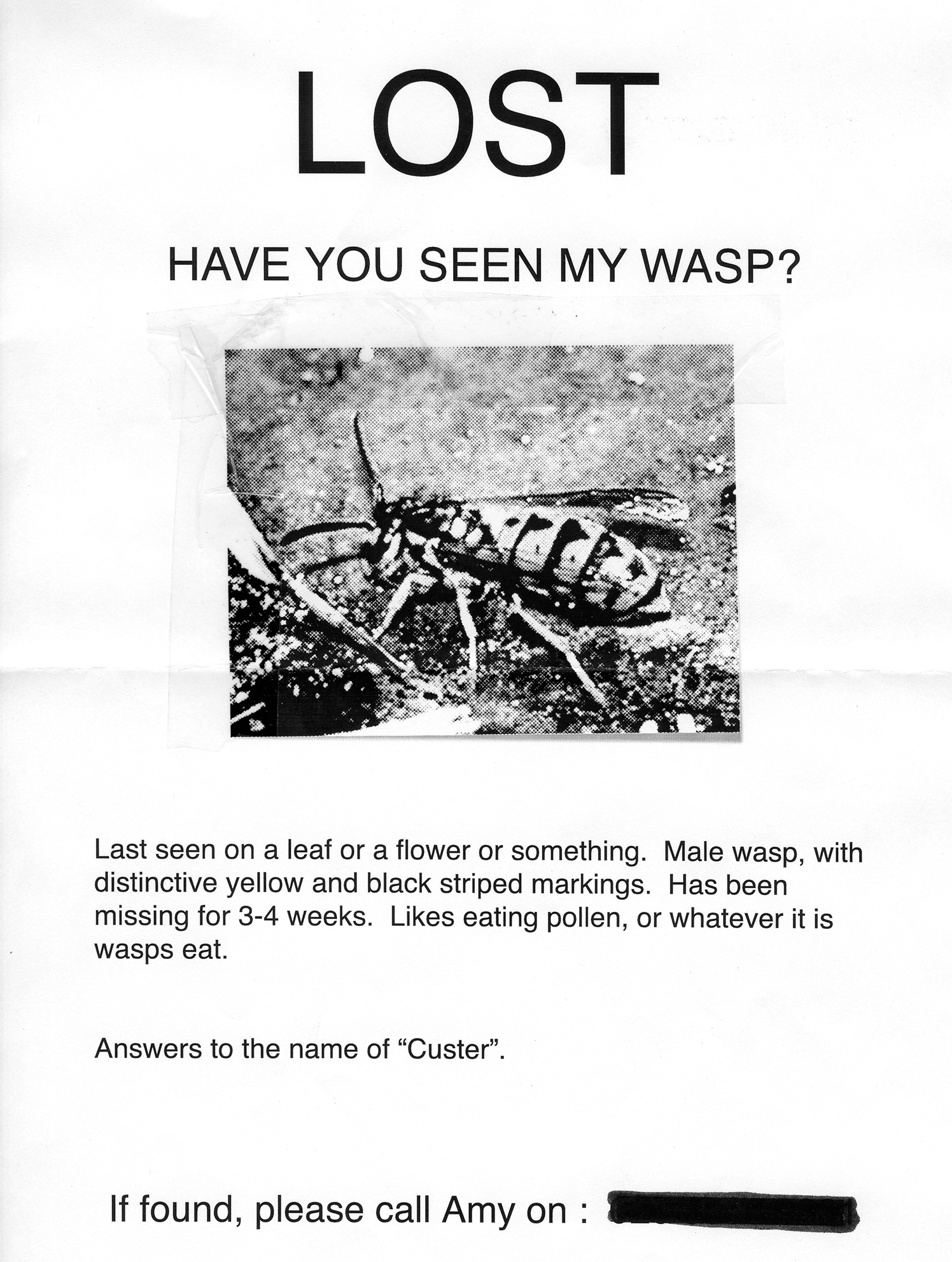 Lost. Have You Seen My Wasp?
