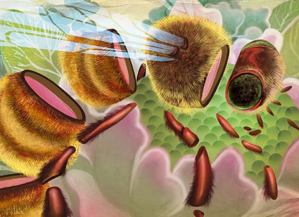 Deconstructed Bee