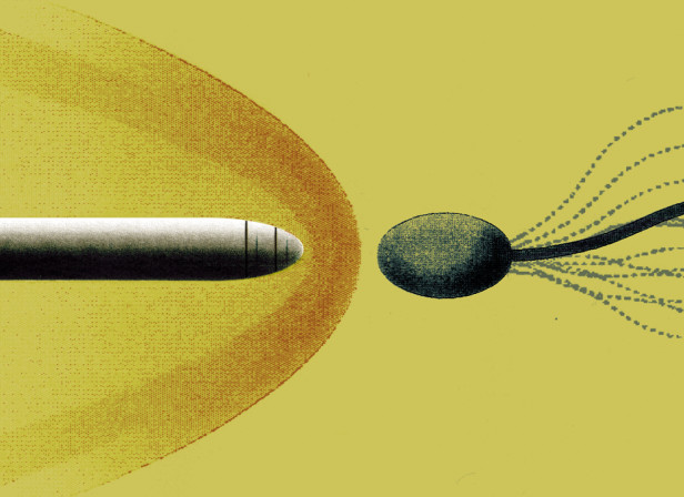 Sperm Warhead